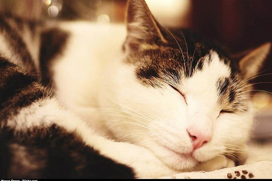 How Long Do Cats Live? – Life Span Of Cats