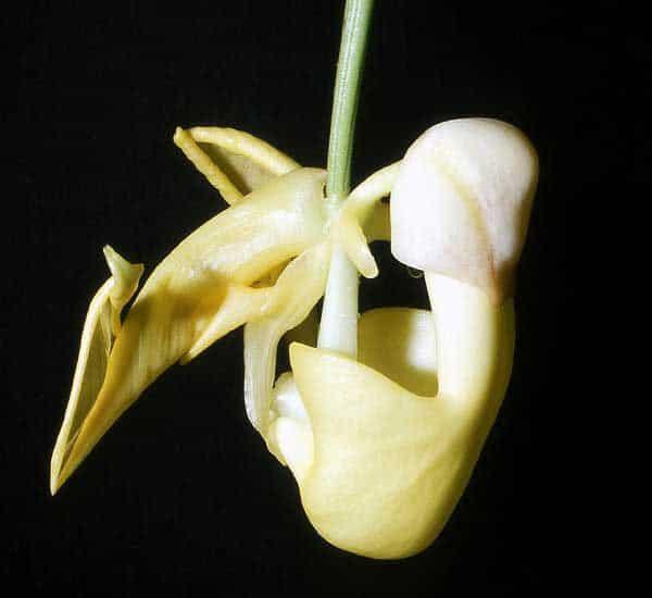 Most Rare Flowers In The World