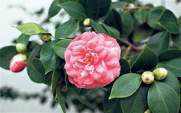 World's 20 Most Rare Flowers