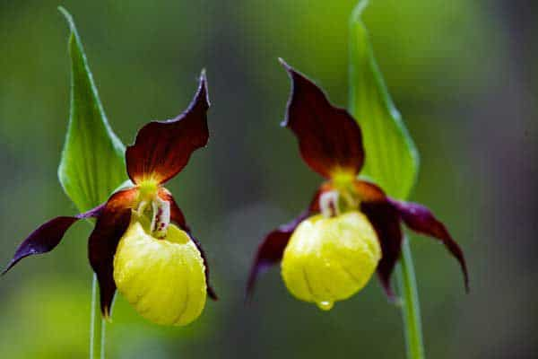 Rare Flowers In The World