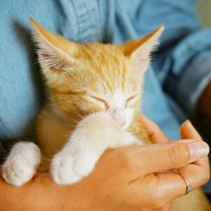 Taking Your Cat to the Vet for the First Time: What You Need to Know!