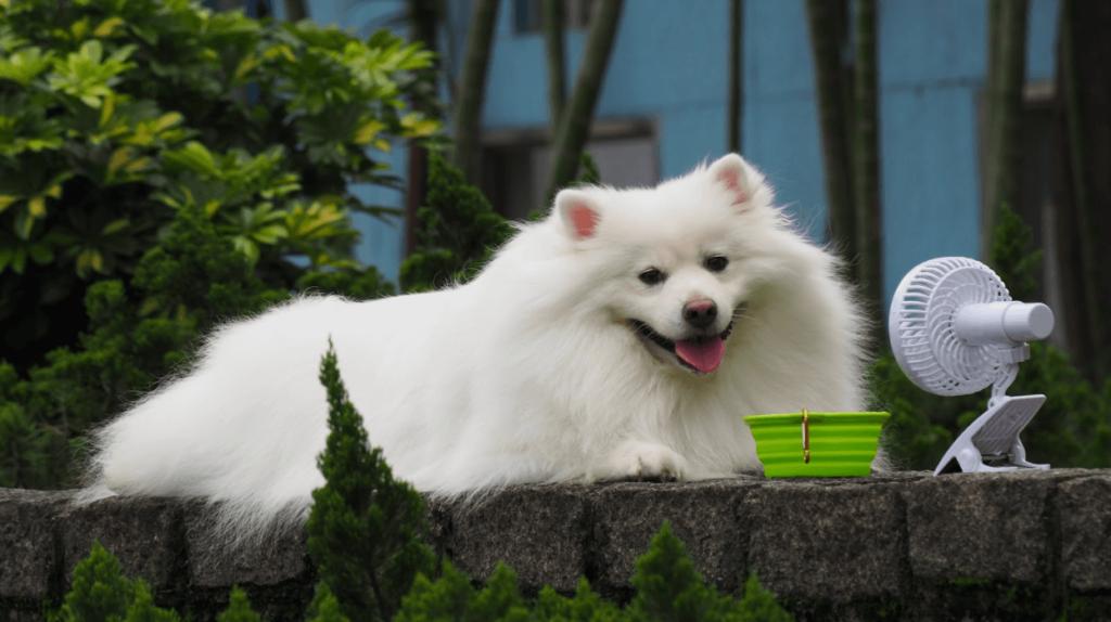 dog optimal temperature