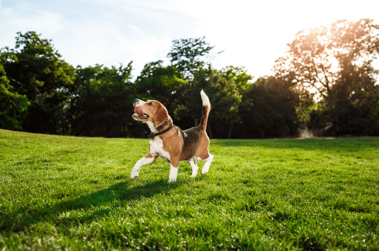 The Best House Temperatures to Keep Pets Comfortable and Healthy