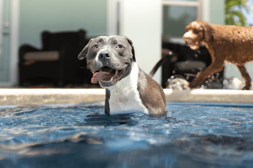 pet cooling