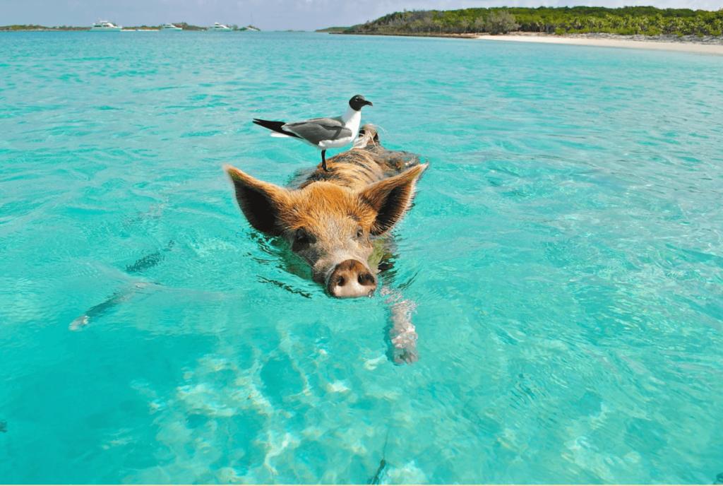 pet swimming