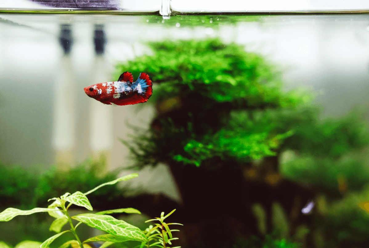 The 6 Most Effective Solutions To Get Rid Of Algae In Your Water Tank