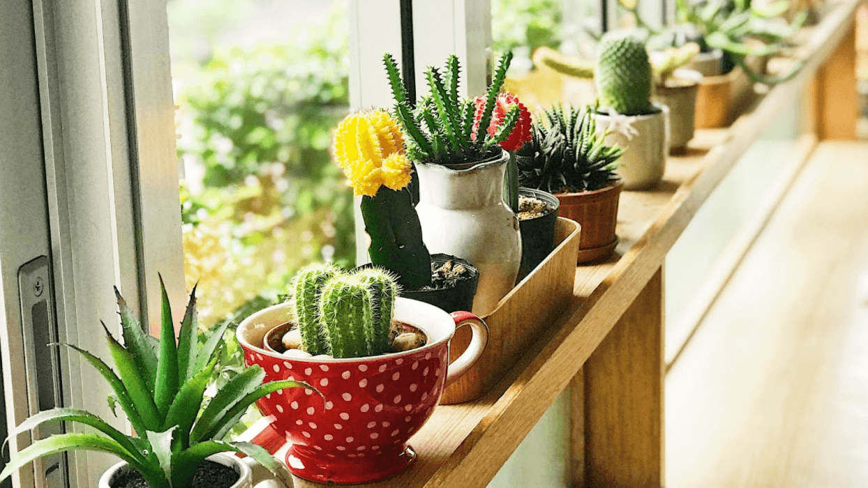 Growing Succulents Indoors? Here's How To Keep Them Healthy