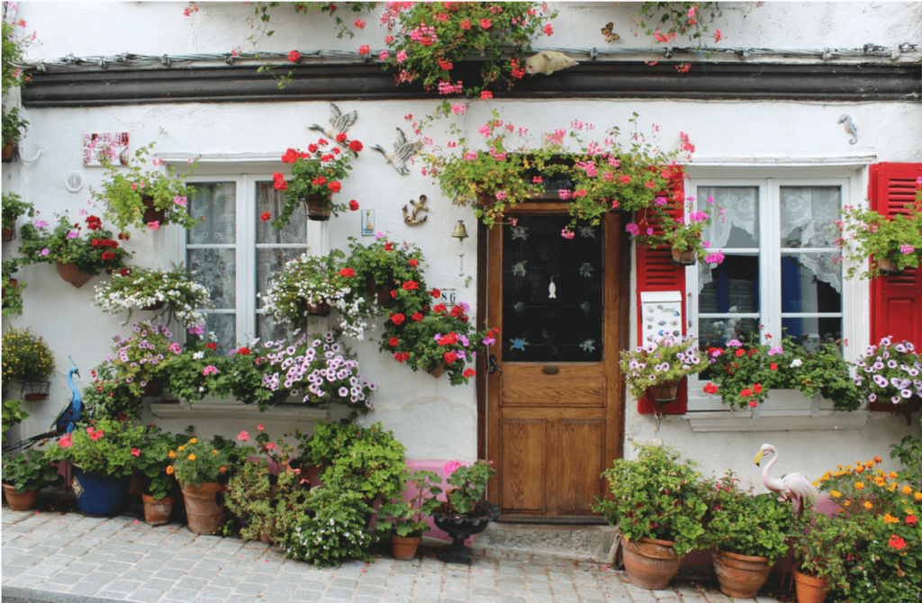house potted plants