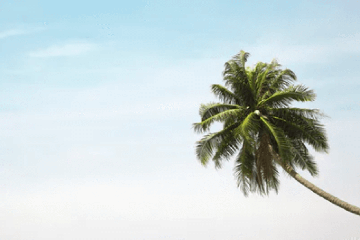 Palm Tree Care and Maintenance Tips from the Experts