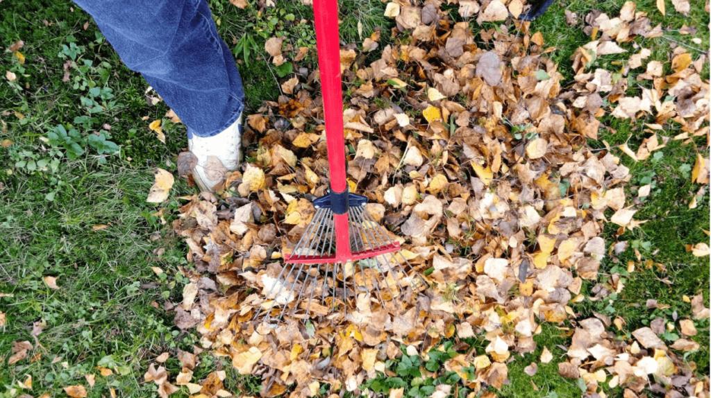raking fall autumn leaf