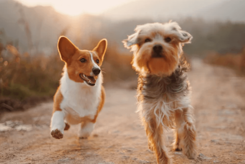 Dog Essentials: Everything Your Pet Needs To Live A Happy Life